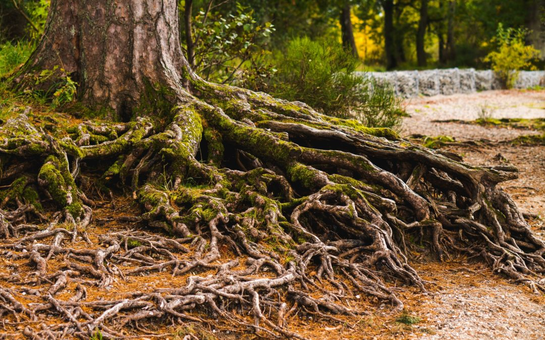 Rooted versus Grounded